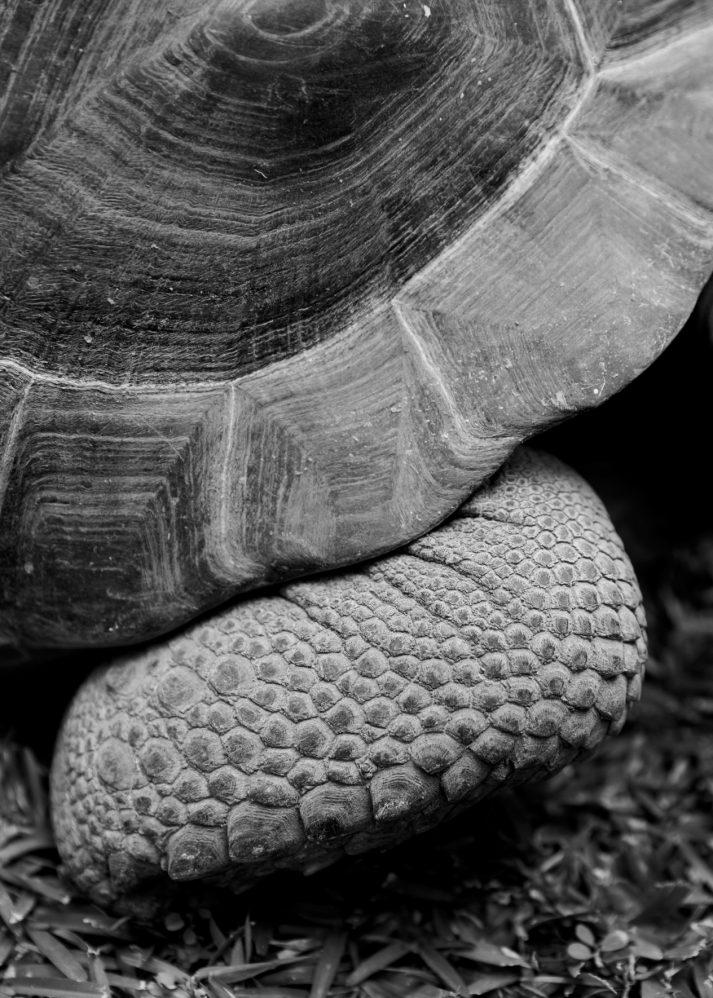 20180116_Atlas_Seychelles__00389